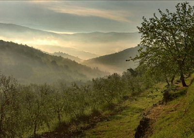 The olive groves in November mist