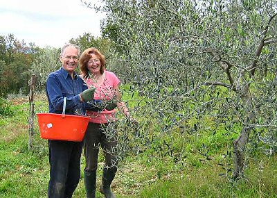Nigel and Deborah picking olives