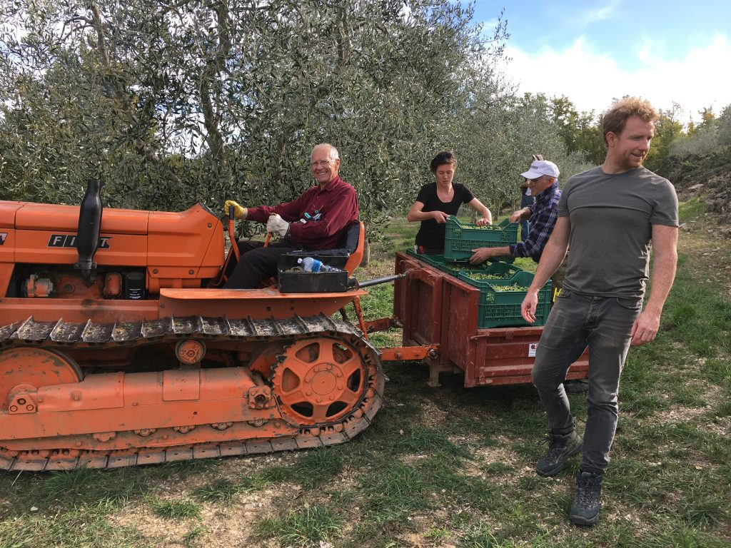 Ripertoli Olive Oil – RIPERTOLI, Tuscany