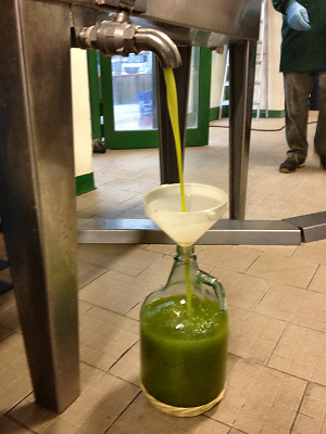 Ripertoli Extra Virgin Olive Oil 2012 emerging from the Press.