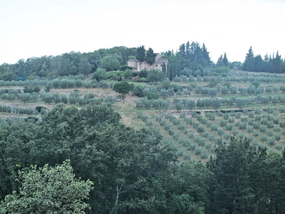 View of the house with olive groves, 2016